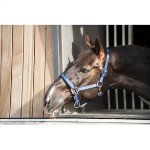 57f6cc9b Catago grimer & træktov - Happy Horse Rideudstyr